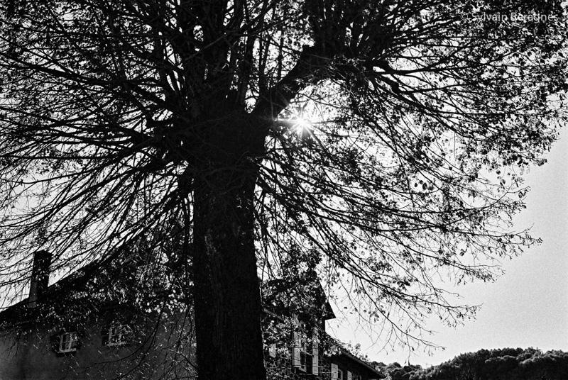 Comme un arbre...